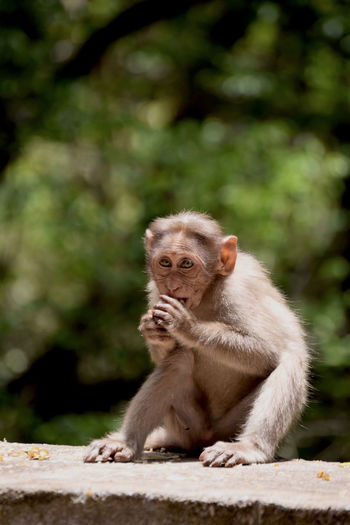 First Eyeem Photo Monkey Nature India Kodaikanal Wild Nohuman