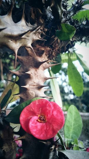 Thorns And Beauty Vintage Photo Flowers Flowers,Plants & Garden Darkness And Light Thorns🌹 Thorns