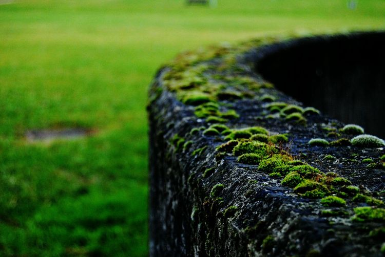 Showcase March Green Musk Musk Moss Life Power Growing Life Close-up No People Textures And Surfaces Outdoors Colours Of Nature
