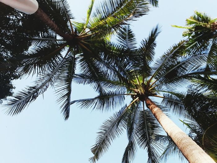 Live For The Story Tree Sky Nature Low Angle View No People Day Summer Vacations Travel Destinations