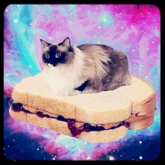 Quien tiene mi sandwich !! aaa lo tiene el pinshii gato