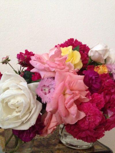 çiçekiçe] Sarı Beyaz#pembe#sarı#karanfil#lila#misgibikoku#bahar