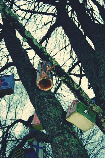 Taking Photos Travel Hyvinkää Finland Tree