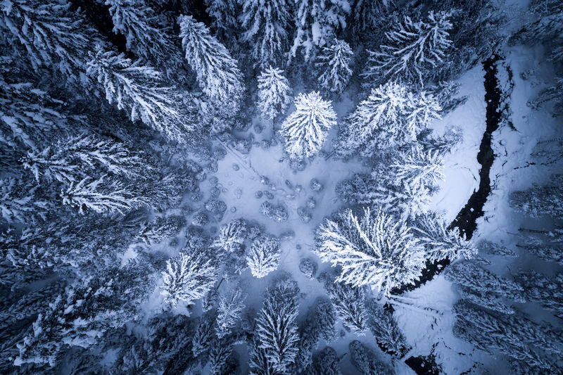 Aerial view of trees in forest during winter
