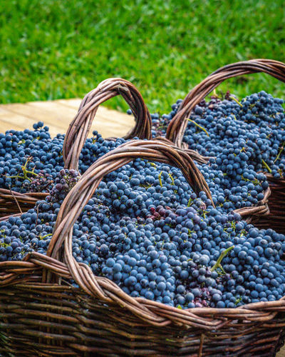 Close-up of grapes in basket on field