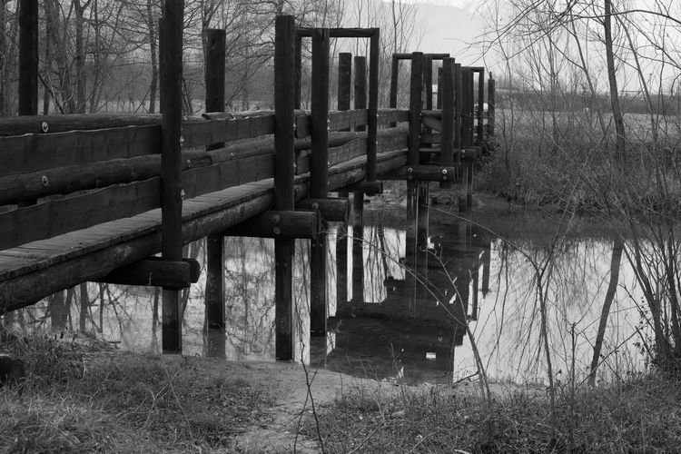 Wooden posts on field by lake in forest