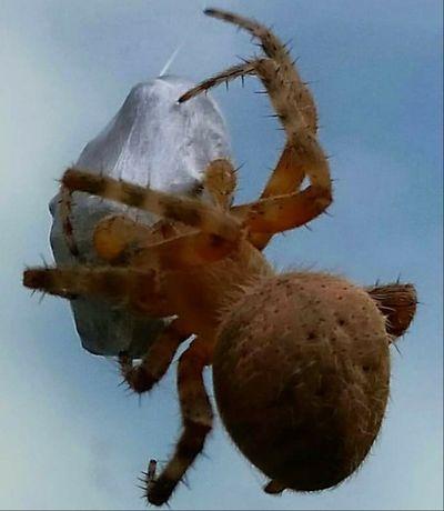 Spider catches a wasp series Spider Spiderweb Spiderworld Spiders EyeEm Best Shots - Nature Ohio, USA Wasp