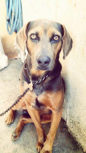 dracko♥&su mirada encantadora First Eyeem Photo