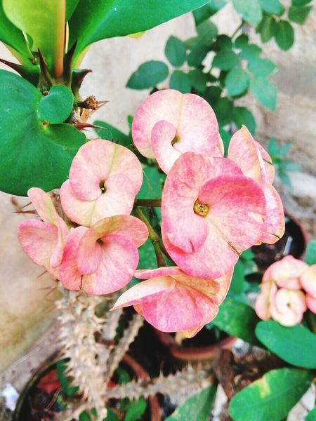 Flower Pink Color Nature Plant Growth Petal Fragility Beauty In Nature Freshness Flower Head Leaf No People Green Color Outdoors Stamen Close-up Day