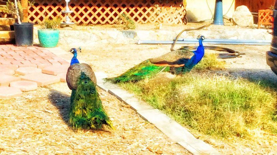 My visitors!