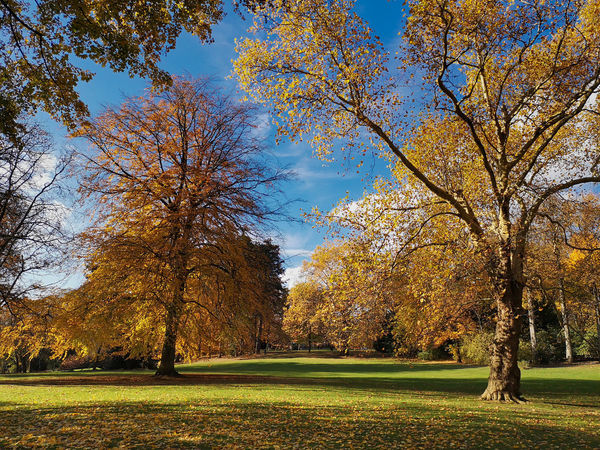 Autumnly ipmpression on the golf course Tree Plant Autumn Change Beauty In Nature Tranquility Tranquil Scene Nature Grass Growth Scenics - Nature Green Color Day Park Land Sky Idyllic Orange Color Landscape Park - Man Made Space No People Outdoors Fall