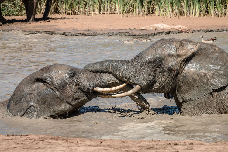 View of elephant on beach