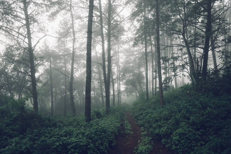 Forest road Fog and rain in the evening Tree Forest Plant Land Tranquility WoodLand Nature Beauty In Nature Growth Tranquil Scene Fog No People Day Non-urban Scene Scenics - Nature Footpath Environment Trunk Direction Outdoors Trail