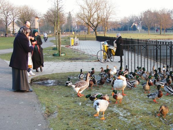 Feeding The Birds Sunday Afternoon At The Park Adapted To The City Fence Bench Water Birds Water Fowl Geese Lake Outdoors Ducks People Park Warande Helmond Bicycle Trees Sunshine Wintertime Frost Ice Path Grass