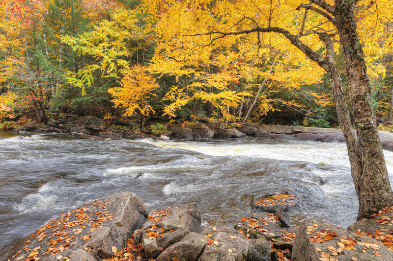 Scenic view of stream flowing in forest during autumn
