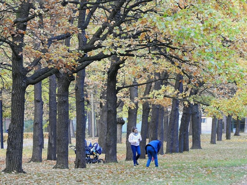 Tree Nature Beauty In Nature Two People Colors Of Sankt-Peterburg Autumn🍁🍁🍁 Park Rainy Days☔ TakeoverContrast Sankt-Petersburg Russia