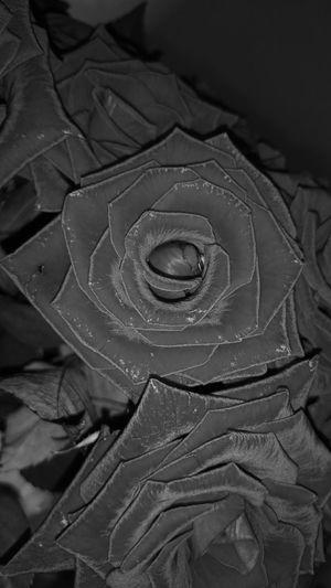 Black & White Black Roses Blackvelvet Tenderness Sony Xperia Z2