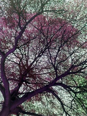 Tree Tree Photography Tree_collection  Tree Colors Colorful Tree Creative Color On Leaves Creative Color Nature Photography Nature Tree View Tree_collection  Low Angle Shot Low Angle