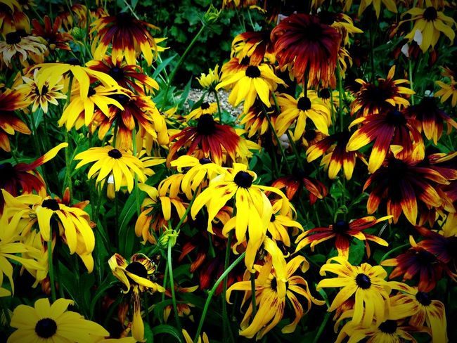 Garden Photography Garden Flowers Flowers,Plants & Garden Cluster Of Flowers