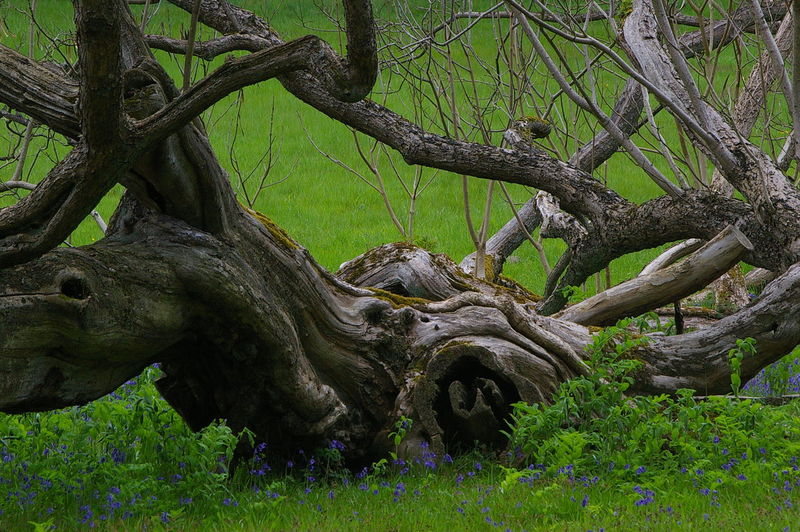 Old Tree Branch Grass Nature No People Tree Tree Trunk