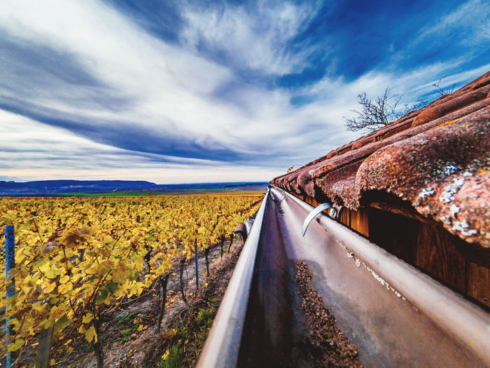 Wild vineyards Vineyards  Vineyard Autumn Landscape Nature Outdoors No People Day Sky Cloud - Sky Plant Road Beauty In Nature Environment Transportation Tranquil Scene Scenics - Nature Tranquility Land Direction The Way Forward Rural Scene Field