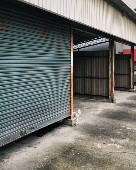 Stray cat sitting near shutter of warehouse