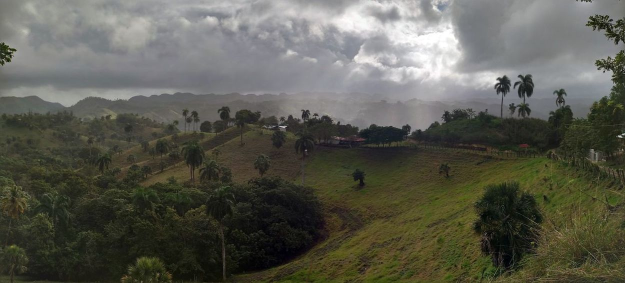 Landscape Agriculture Tree Nature Rural Scene Storm Cloud Cloud - Sky No People Day Outdoors Beauty In Nature Social Issues Fog Tea Crop Thunderstorm Rice Paddy