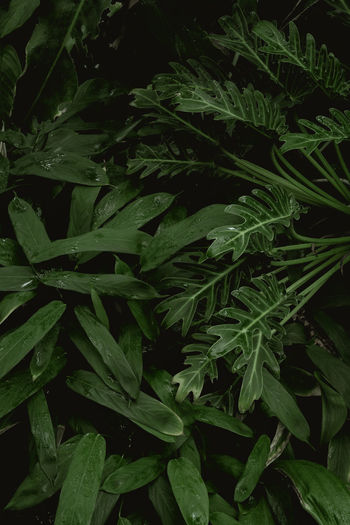 Full frame shot of fresh green plant