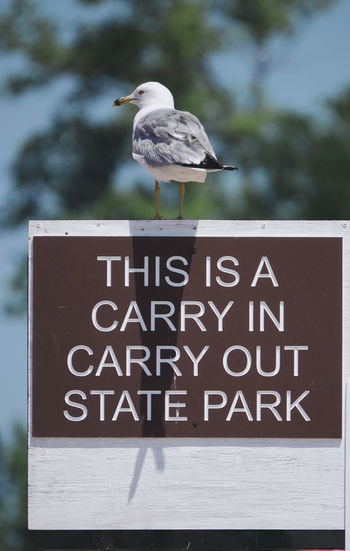 Seagull perching on a sign