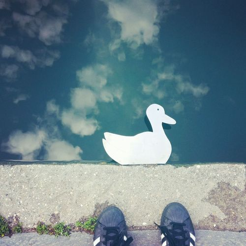 Adidas Originals Adidas Superstar Duck Ducks At The Lake Street Photography Street Art Reflection Bird Low Section Beach Sea Standing Sky Cloud - Sky Footwear Stone Tile Personal Perspective Human Leg Human Feet Shoe