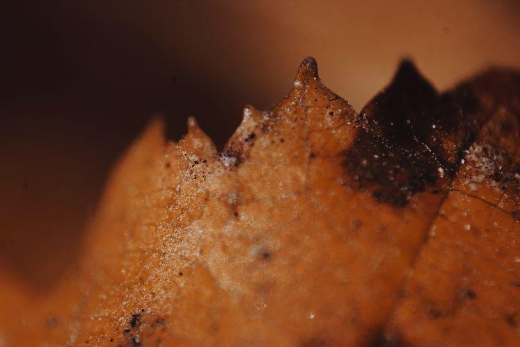 Macro shot of crab on leaf