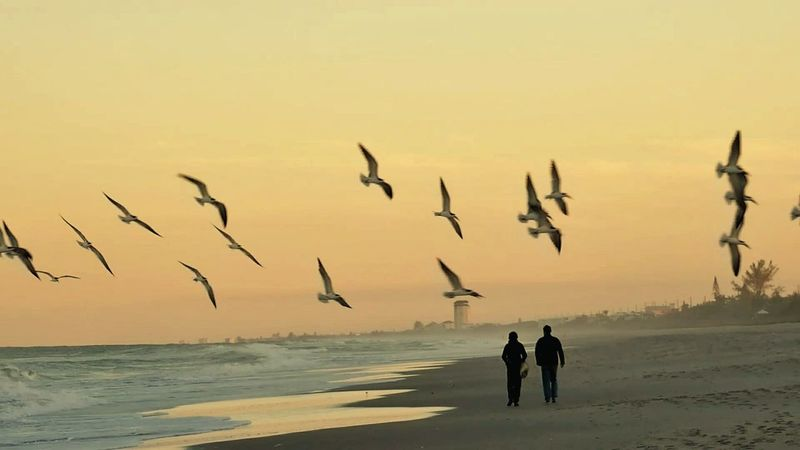 Couples❤❤❤ Seagulls Flying Over Me Romantic Scenery SEAGULL IN FLIGHT Beach Photography Dusk Colours Vacations This Is Florida! Coastline Tranquil Scene Relaxing Nature Outdoors Sea Beachphotography Beachlovers Beach Life Photography In Motion Telling Stories Differently Nature's Diversities
