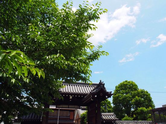 Kyoto Japan Mibu Mibudera Temple Tree Gate Sky Blue Sky Beauty In Nature Healing Day Low Angle View Outdoors Nature Olympus PEN-F 京都 日本 壬生寺 新撰組