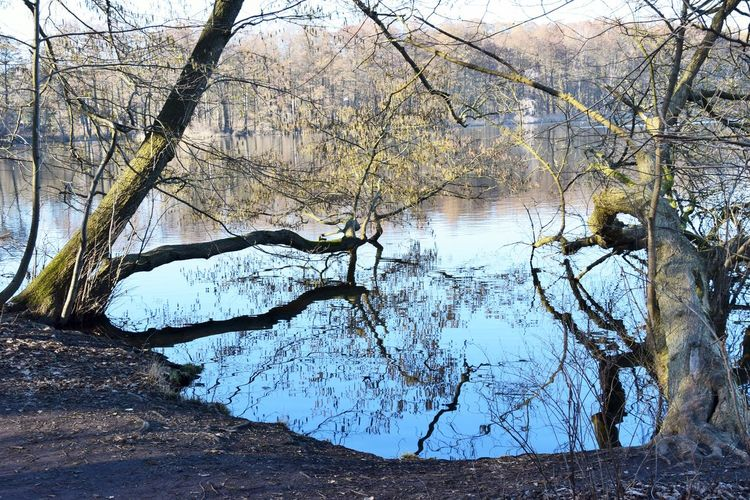 Tree Water Tranquility Plant Nature No People Beauty In Nature Branch Day Trunk Bare Tree Tree Trunk Land Reflection Tranquil Scene Lake Forest Non-urban Scene Outdoors Lake View Lakeside Lakeshore Naturelovers