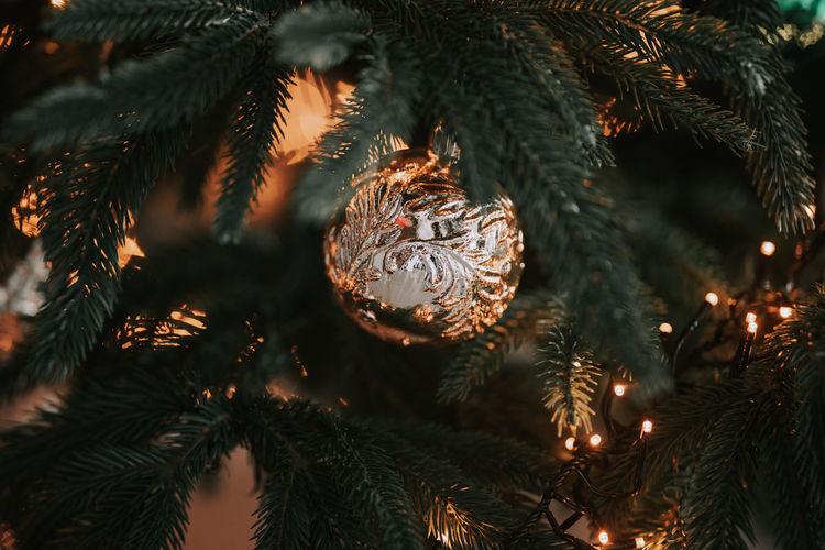 Full frame shot of christmas tree