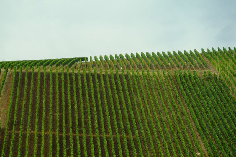 High angle view of vineyard against sky