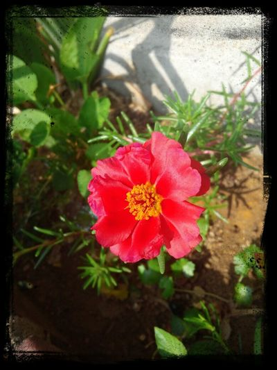길거리에서 빨간색 꽃 Nature