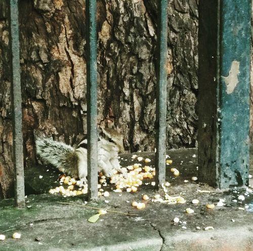 No People Day Outdoors Building Exterior Squirrel Corn Vivo