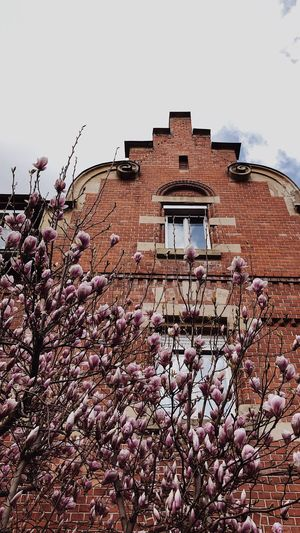 magnolia in bloom Spring Flowers Spring Tree Cityscape Stuttgart Ost Stuttgart Brick Building Brick Wall Magnolienblüte Magnolia Blossoms Magnolia Flower Magnolia Tree Magnolia Architecture Built Structure Building Exterior Sky Building Nature Day Low Angle View Clear Sky Wall No People Brick Brick Wall Outdoors Old Tree Plant
