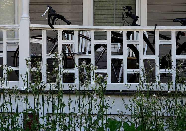 Two biked parked on a front porch in Oregon Hill, Richmond, VA 2catswithcameras City Overgrown Porch RVA Richmond, VA Architecture Bicycle Building Exterior Built Structure Day No People Oregon Hill Outdoors Pjpink Plant Porch Railing Urban Weed
