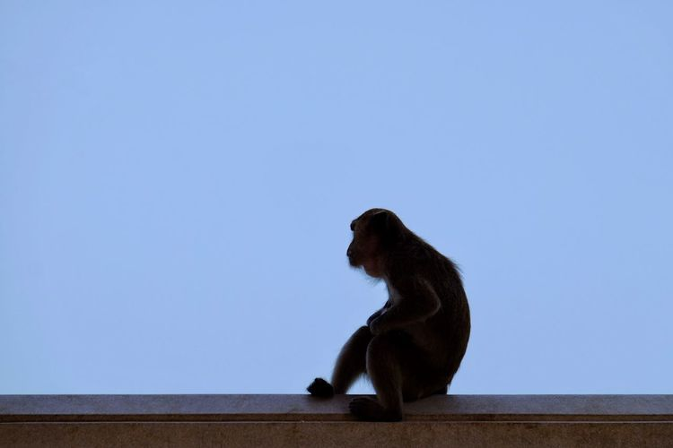 Low angle view of monkey sitting