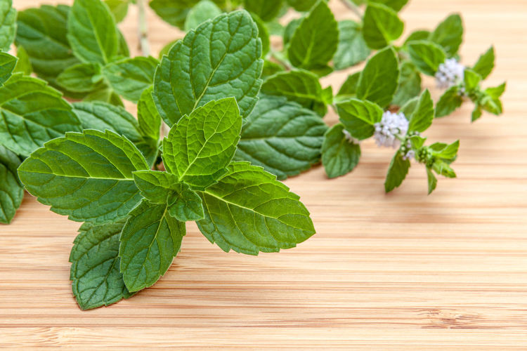 Close-up of mint leaves on table