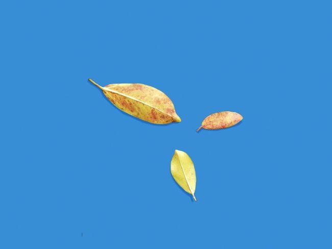 And they meet again. Urban Leaves Yellow Leaf Foliage Minimalism EyeEm Best Shots EyeEmNewHere EyeEm Gallery EyeEmBestPics Life Plant Visual Creativity Botany Minimal Calm EyeEm Selects Astronomy Space Clear Sky Moon Blue Colored Background Crescent Sky Blue Background Leaf Vein Leaves Fallen Plant Life The Still Life Photographer - 2018 EyeEm Awards