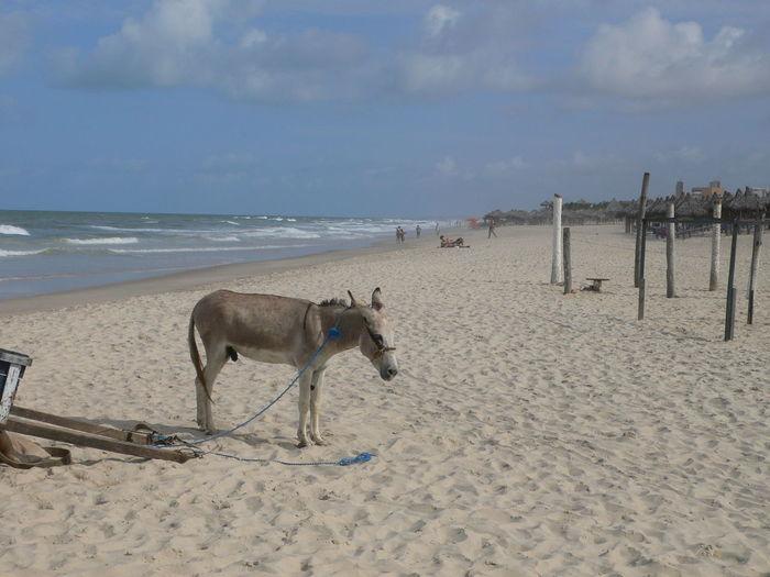 Donkey Tied To Cart On Beach