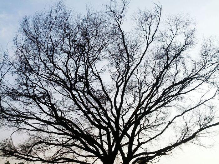 Tree Love Silhouette Fall Autumn Open Edit Islamabad Pakistan