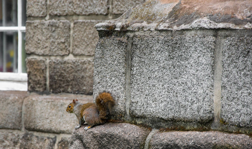 View of squirrel on wall