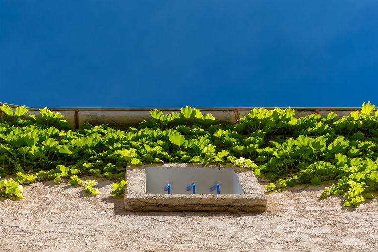 Summer contrast Architecture Blue Blue Sky Clear Sky Colors Connection Day Façade Green Blue Growth Looking Up Mediterranean  Nature No People Outdoors Plant Provence Sky South Of France Summer Sunlight Sunset