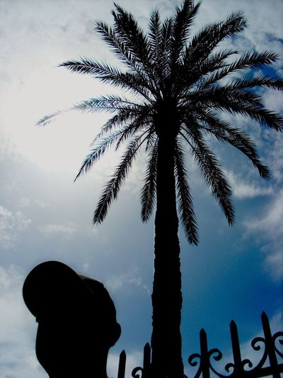 Palm Tree Silhouette Sky Outdoors Nature Day Ibiza
