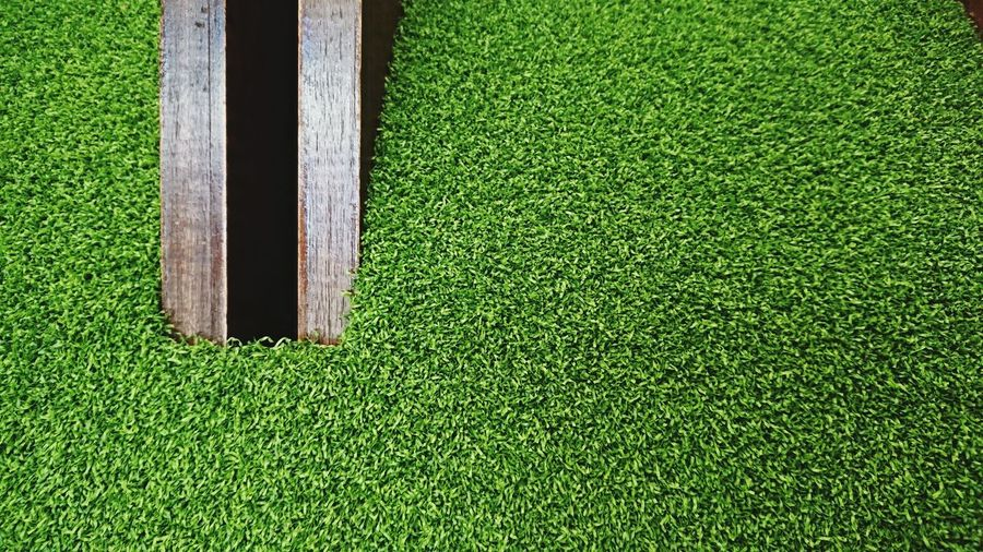 High angle view of green grass