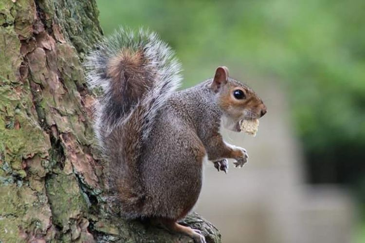 Small And Swift Squirrel